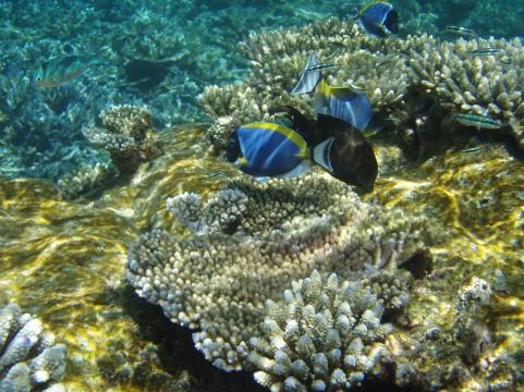酸性化する海・海洋酸性化