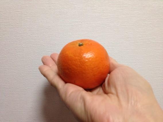 今美味しい柑橘系は「桶柑(タンカン)」