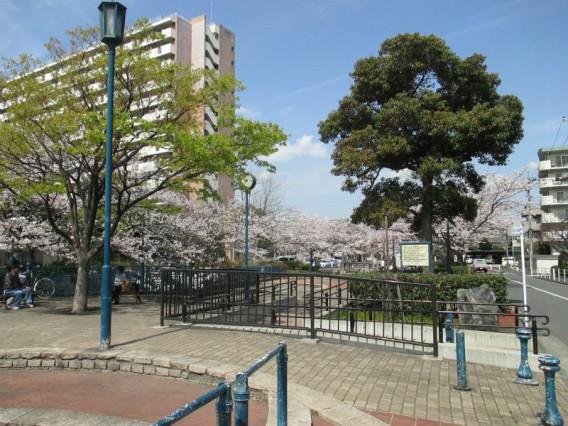 六郷水門の桜・2014年4月2日
