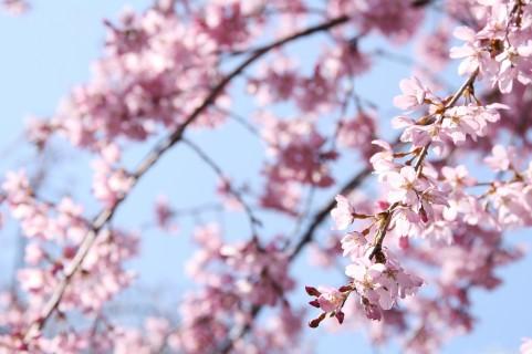 春なのに調子が出ない・春は苦手な方へ