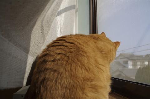 「猫背」?解消したいですか?ついでに運命も変わります。