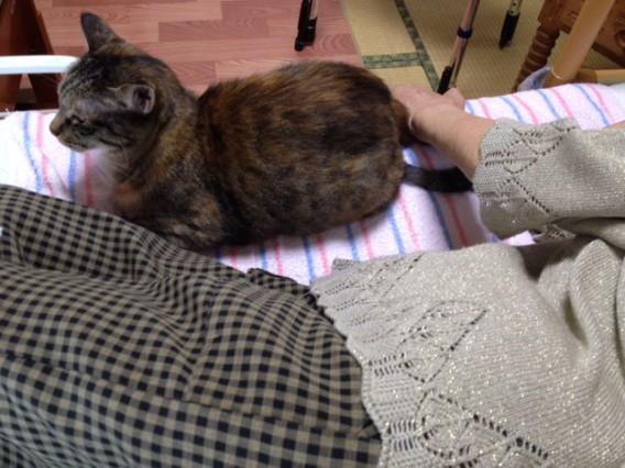 例えばこんな施術の風景「ペットのいる方へ」猫の順番待ち?