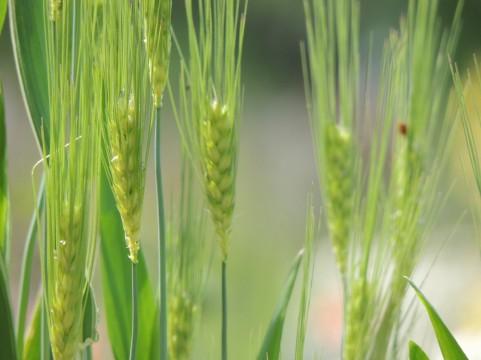グルテンフリーの食生活の根拠・食の歴史に起こった革命