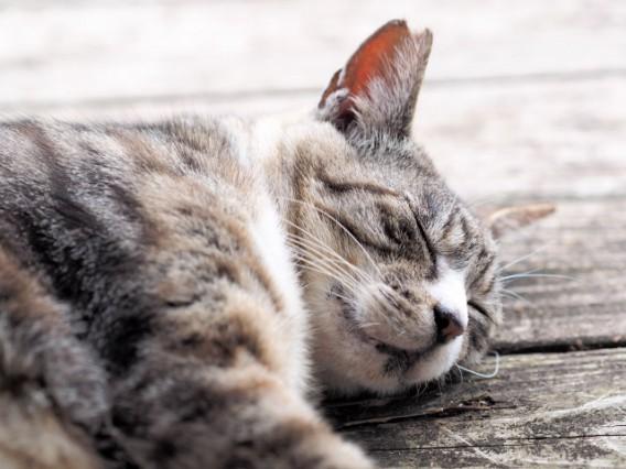 睡眠が与える影響力の大きさ