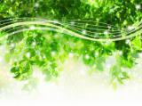 トラウマの解消とエネルギーヒーリング・レイキ